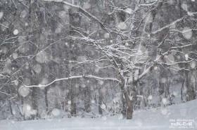 居間から見た雪景色