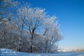 利尻と樹氷