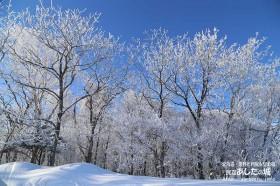 樹氷がついた私道の林