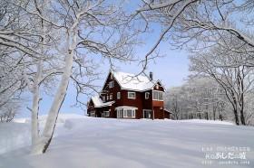 雪が木の幹にも張り付く