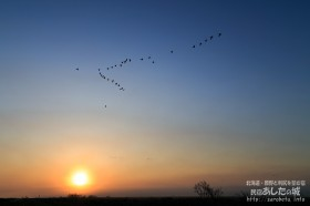 日の出のころとマガンの群れ