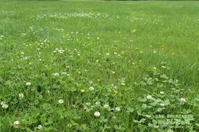 芝生の庭ではなくて野原状態