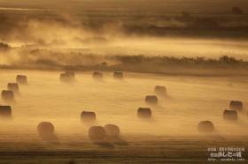 朝霧と牧草ロール