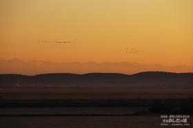 朝焼けに飛ぶ渡り鳥