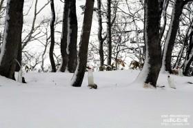 樹液も凍る