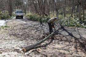 椎茸の榾木作り02