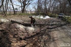 椎茸の榾木作り03