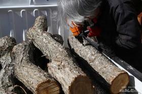 榾木に穴を開ける