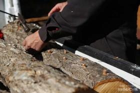 椎茸の菌を植える02