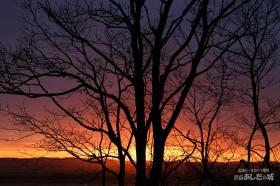 庭の木と朝焼け
