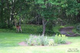 小鹿が庭に